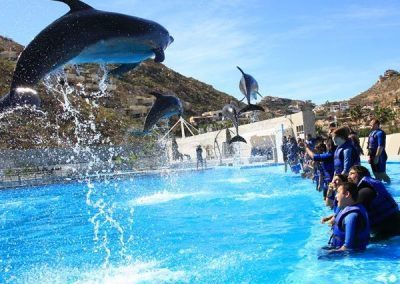swim-with-dolphins-at-mexico-th-400x284_62a34af826_af8e6af54a4b781715fe336d4679a1cd